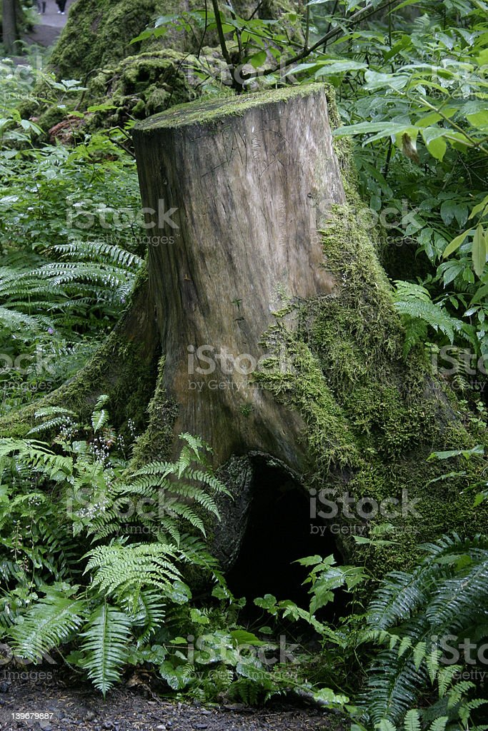 Tree Stump in Forest royalty-free stock photo
