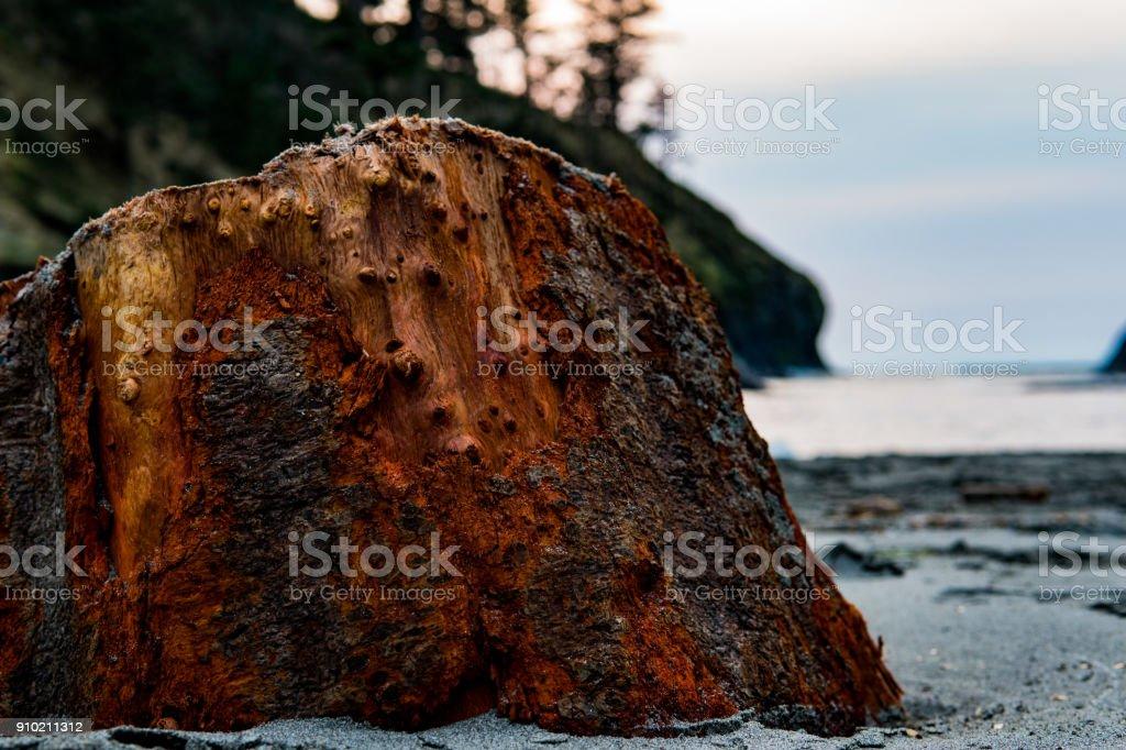 Tree Stump on the beach stock photo
