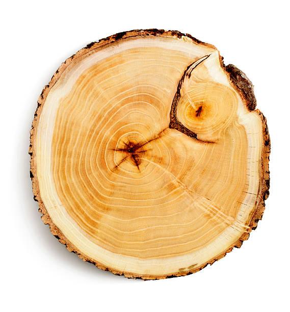 souche d'arbre - branche partie photos et images de collection
