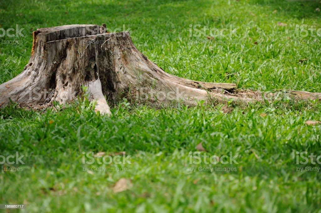 Tree Stump royalty-free stock photo