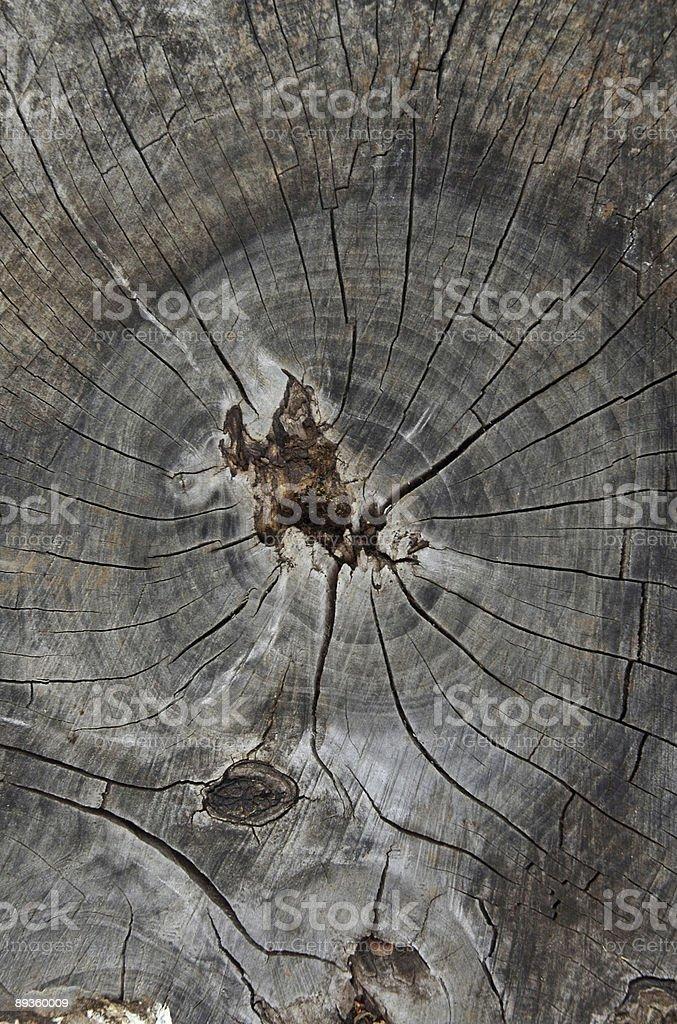 Souche d'arbre photo libre de droits