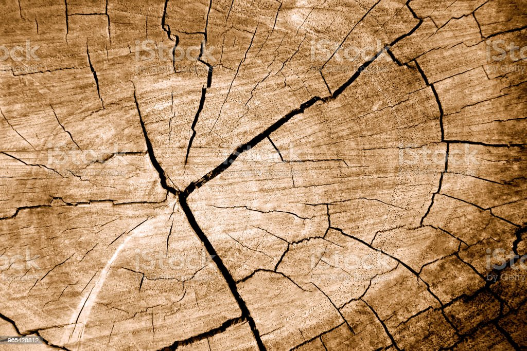 Tree stump texture on surface wood background. Old rough timber. Trunk and cut. Vintage and sepia tone. Top view. Close up. - Zbiór zdjęć royalty-free (Abstrakcja)