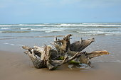 A tree root lays on a sandy beach as ocean waves pummel it further inland