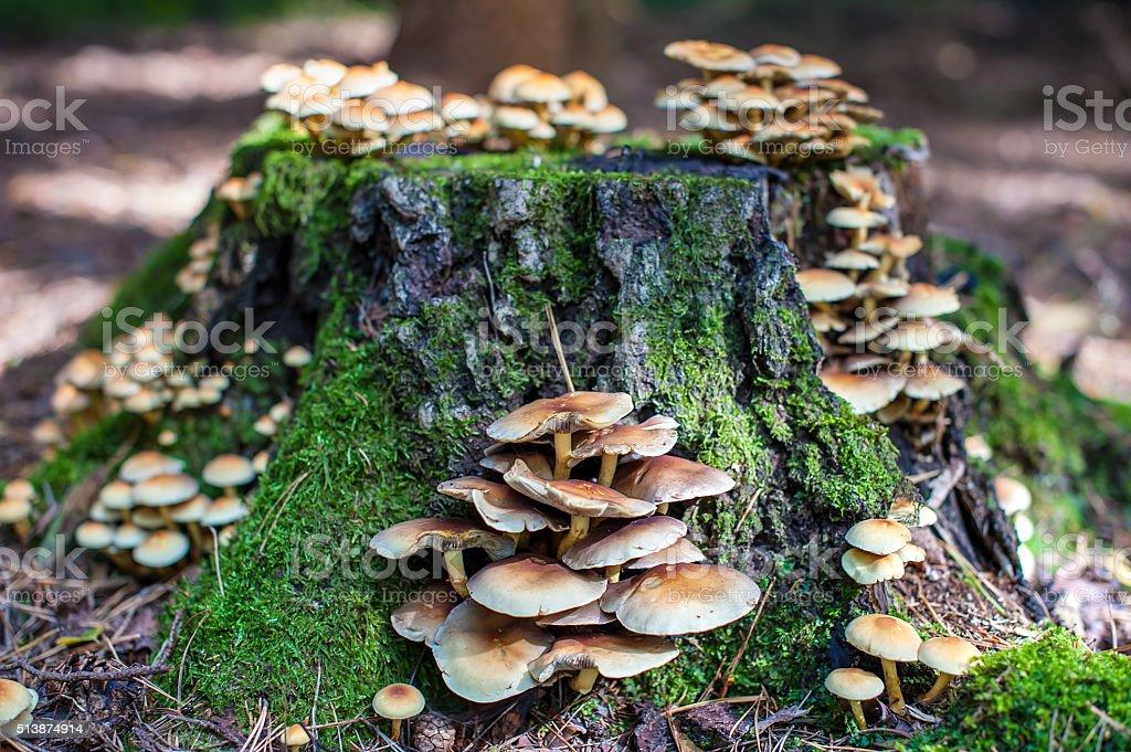 Tree stump with mushrooms stock photo