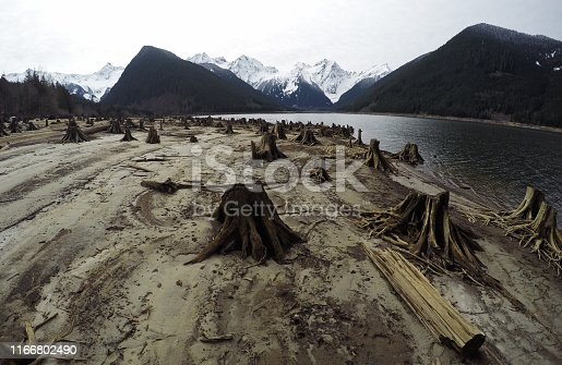 Tree stumps after deforestation located around lake in Canada on dark and moody overcast day. This photo depicts drought conditions and Climate Change.