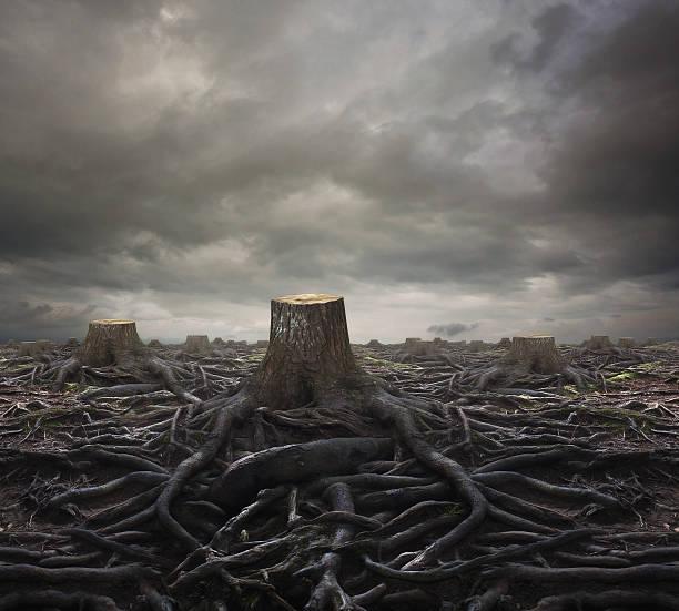 árbol stumps - deforestacion fotografías e imágenes de stock