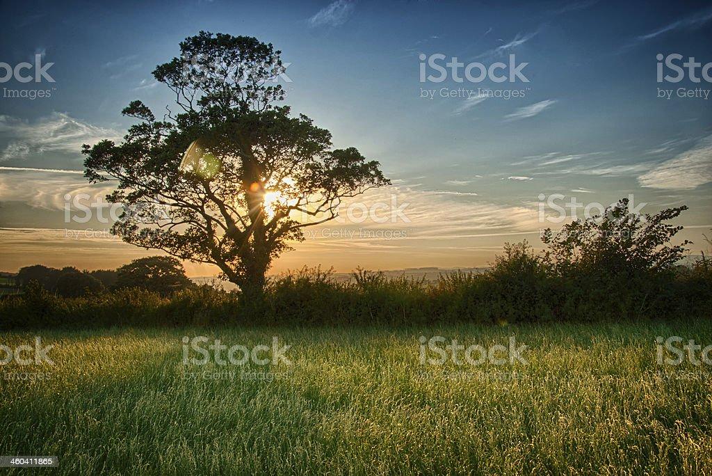 Tree Sunset stock photo