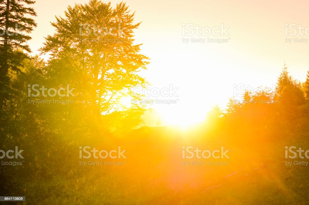 Tree sunset royalty-free stock photo