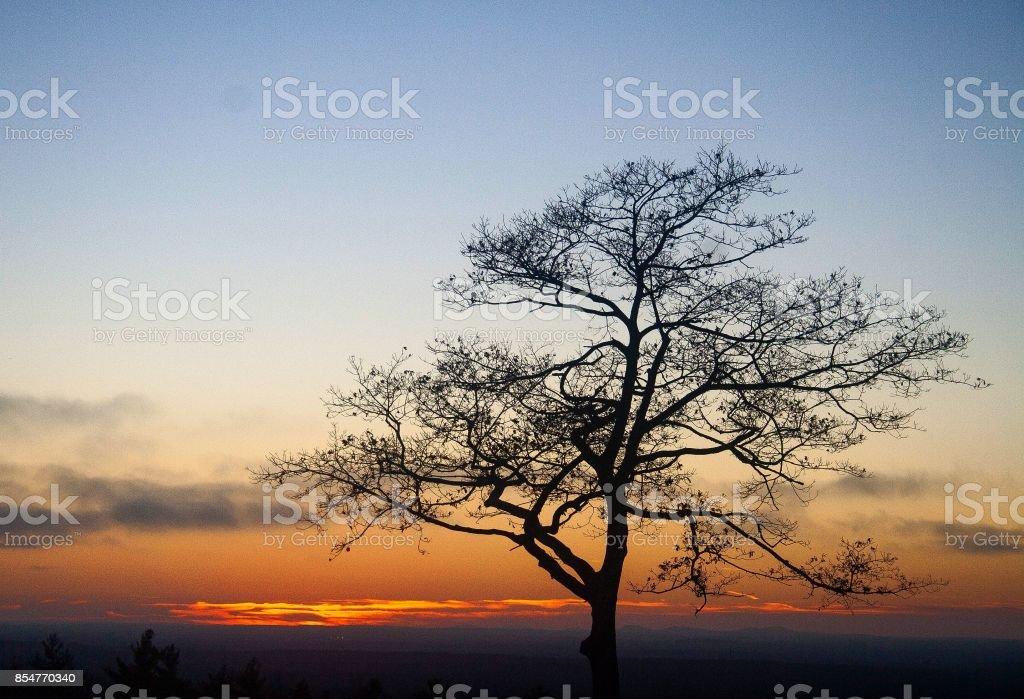 Tree, Sunset, Silhouette stock photo