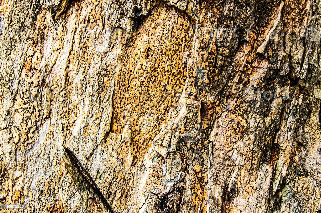 Tree surface royalty-free stock photo