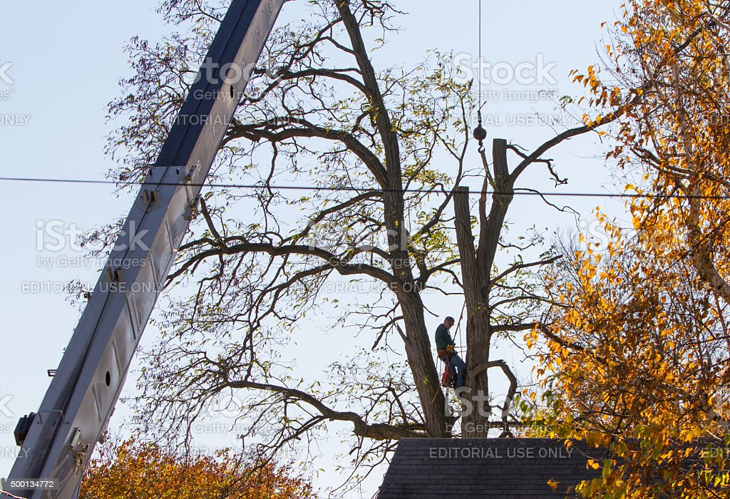 Tree Surgeon Arborist Cutting Tree With Crane Assist Stock Photo Download Image Now Istock