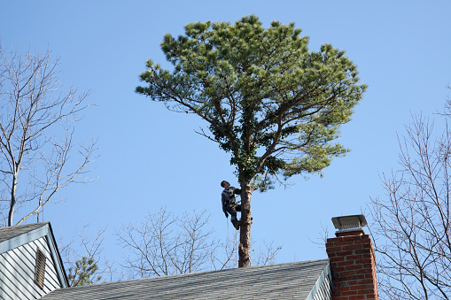 istock Tree Surgeon at Work 483800103