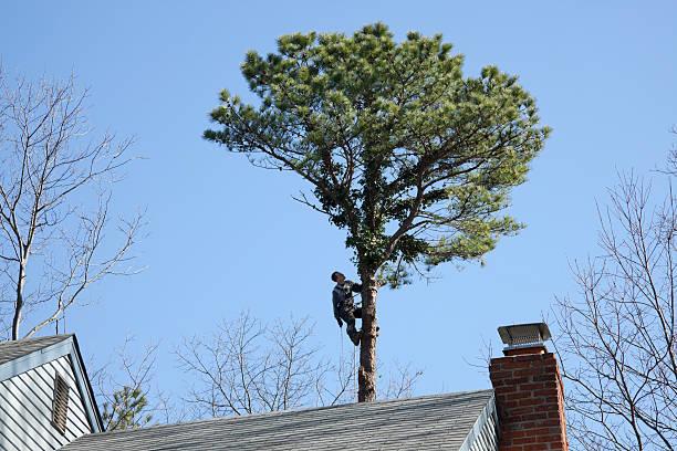 Tree Surgeon at Work stock photo