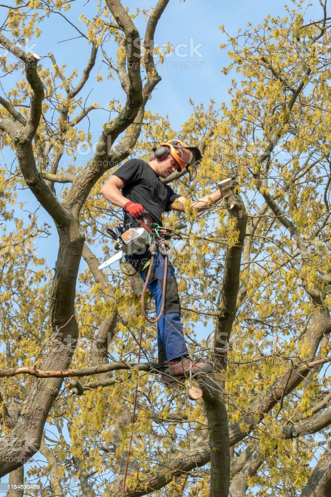 Tree Surgeon At Work Up A Tree Stock Photo Download Image Now Istock