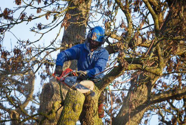 Tree surgeon cutting tree stock photo