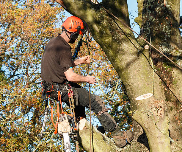 tree surgeon hanging from a branch - tree surgeon stock photos and pictures