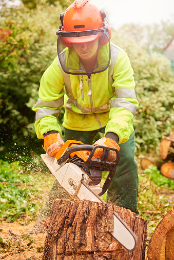 istock tree surgeon in action 877247950