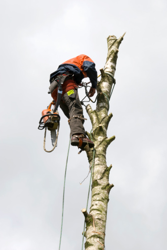 istock Tree Surgeon 157602980