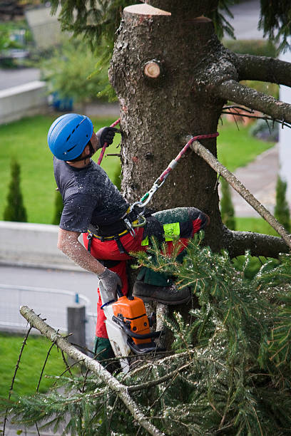 Tree surgeon forestry worker at work service occupation stock pictures, royalty-free photos & images