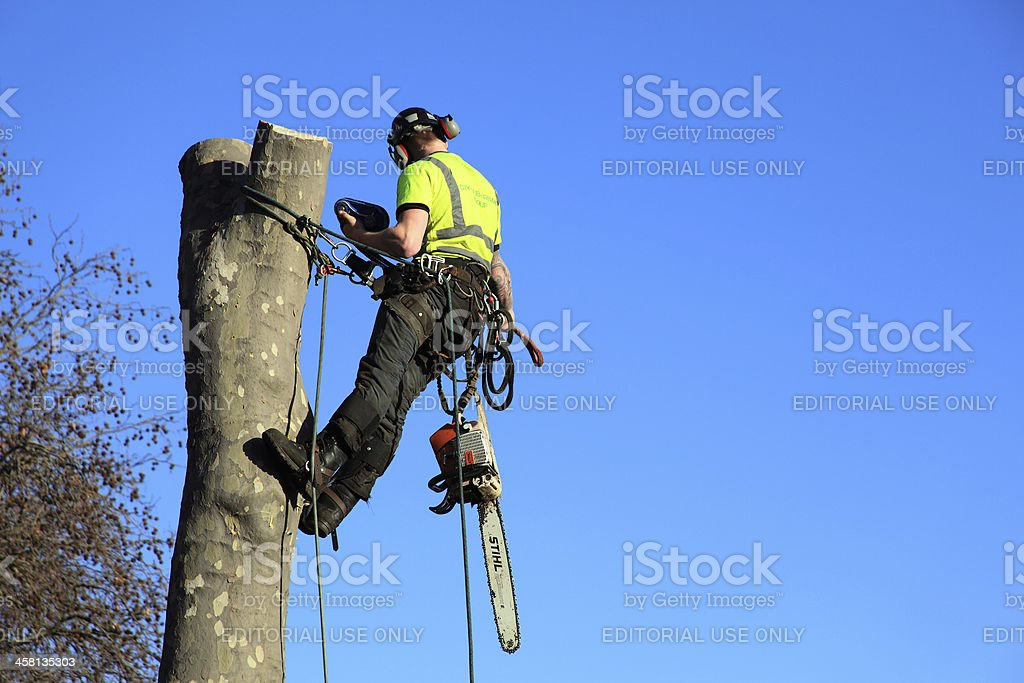 Tree Surgeon stock photo