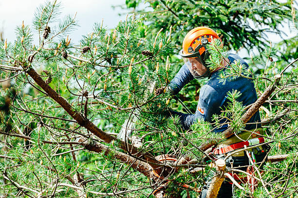 tree surgeon - tree surgeon stock photos and pictures