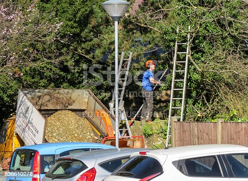 Tree Surgeon Pruning Branches In A Car Park Stock Photo 836610278