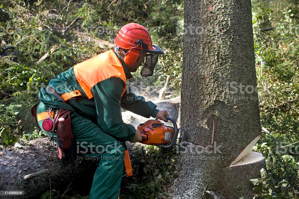 A tree surgeon removing a tree royalty-free stock photo