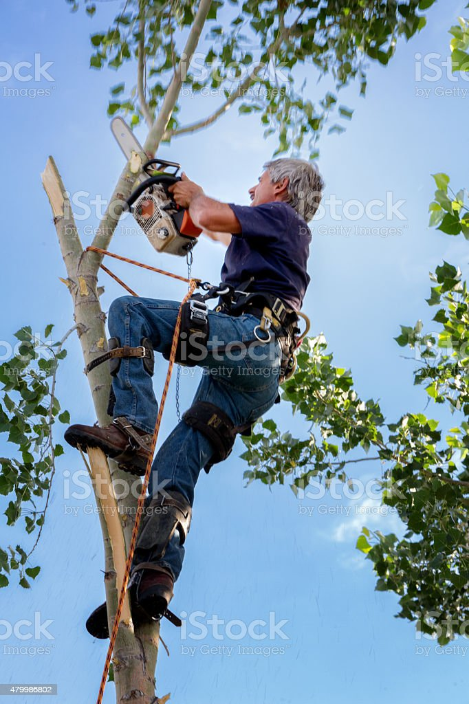 Tree Surgeon working on a Trunk stock photo