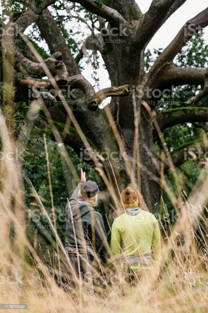 Tree Surgeons Looking At Tree Trunk With Woman Pointing Stock Photo Download Image Now Istock