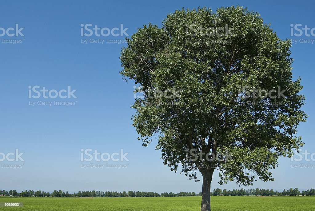 tree surrounded by nature royalty-free stock photo