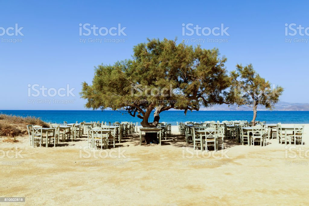 Tree tavern stock photo