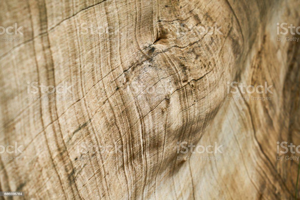 Tree Texture and Background foto stock royalty-free
