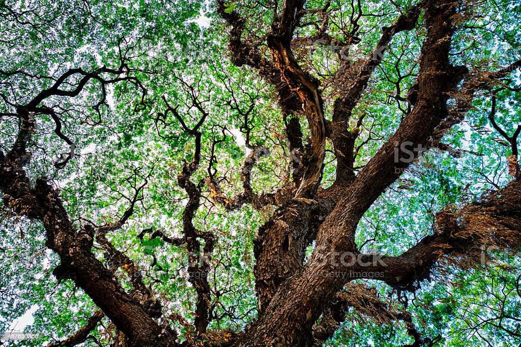 Tree Texture Background stock photo