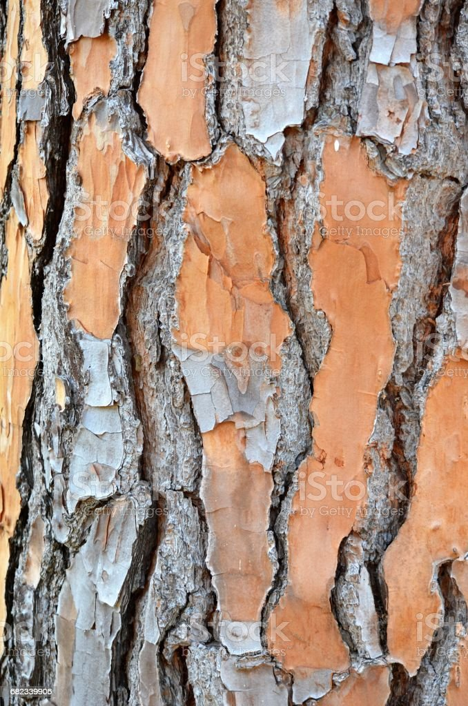 Tree texture background foto stock royalty-free