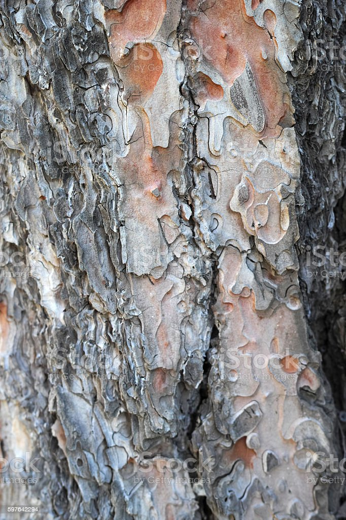 Tree Texture Close-Up Weathered Pattern Natural Background stock photo