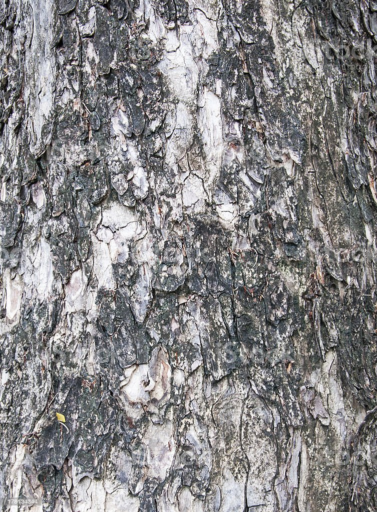 tree texture pattern. royalty-free stock photo