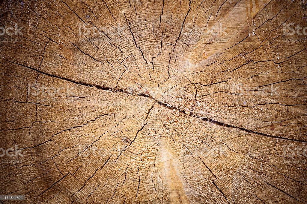 Tree texture royalty-free stock photo