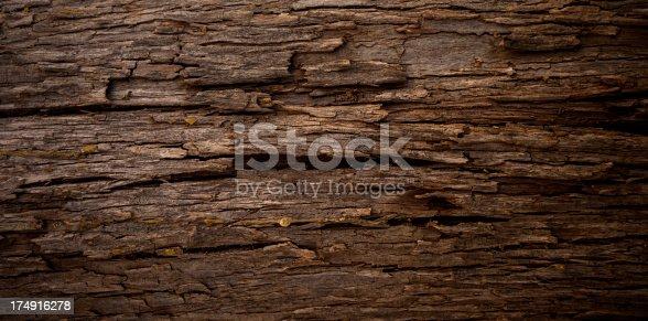 istock Tree texture 174916278