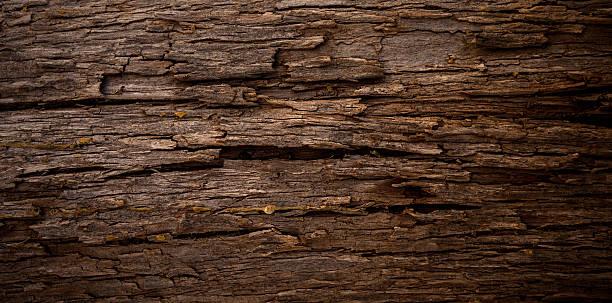 Baum Textur – Foto