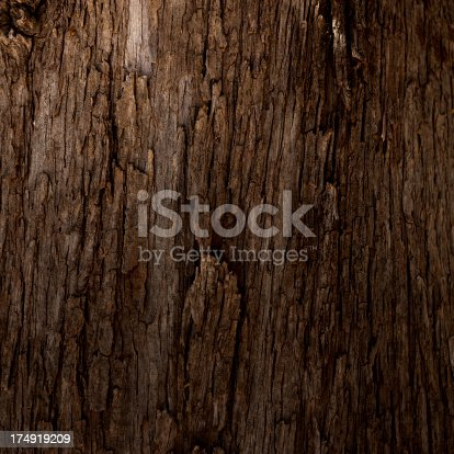 istock Tree texture 174919209