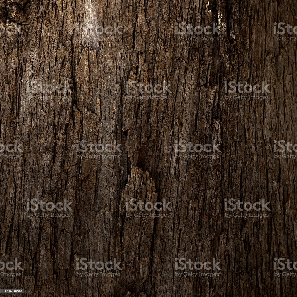 Tree texture stock photo