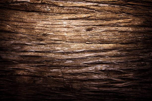 Tree texture stock photo