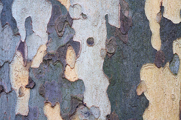 tree texture - natural pattern stock photos and pictures