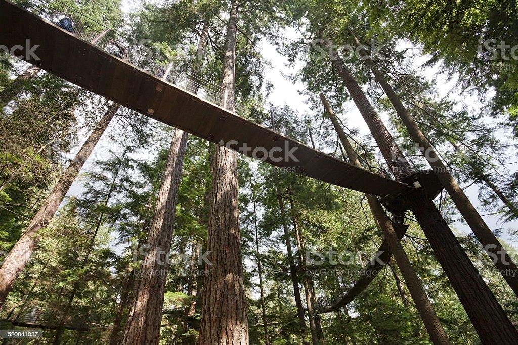 Tree Top Adventures stock photo