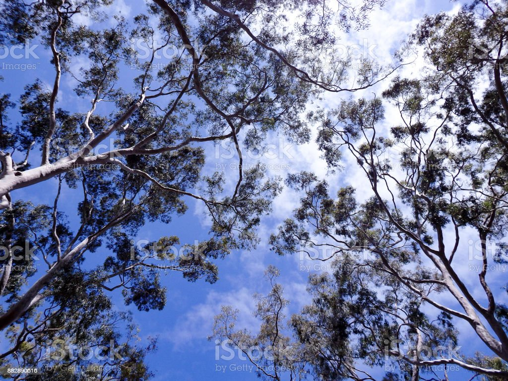 Tree Top Cloudy Blue Sky stock photo