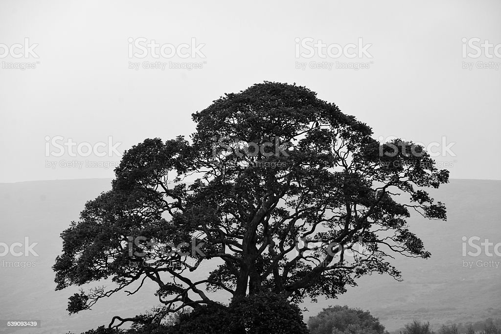 Tree Top overlooking Carlingford, Co. Louth, Republic of Ireland stock photo