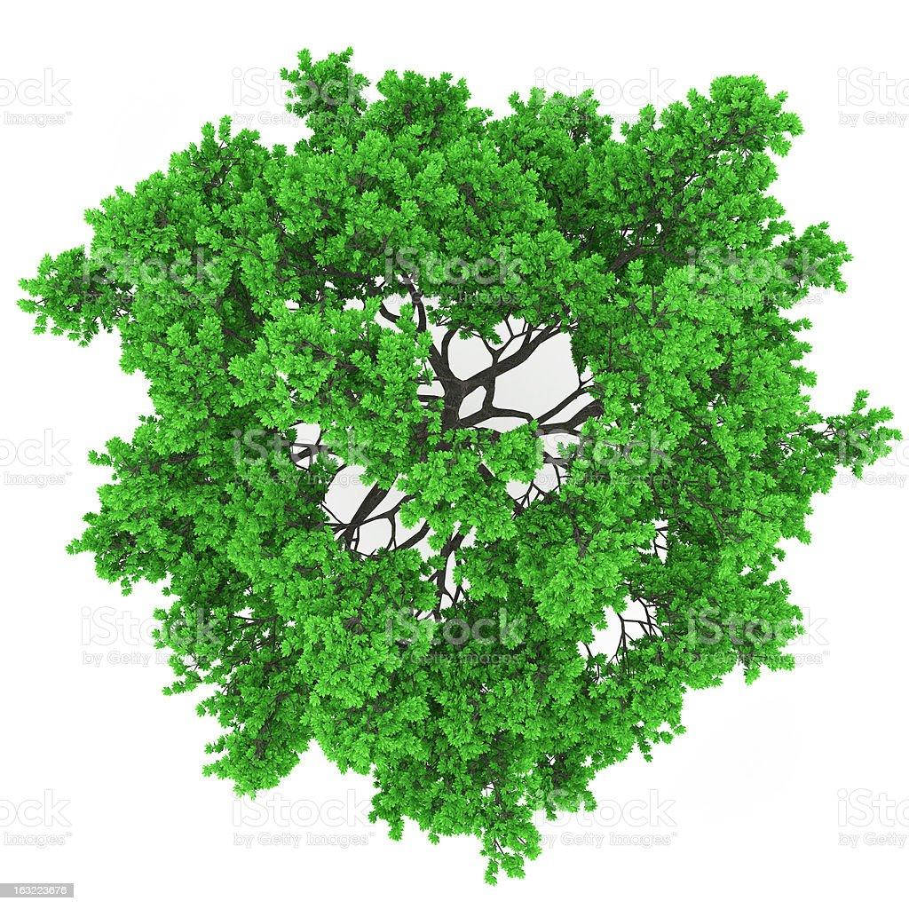 tree top stock photo