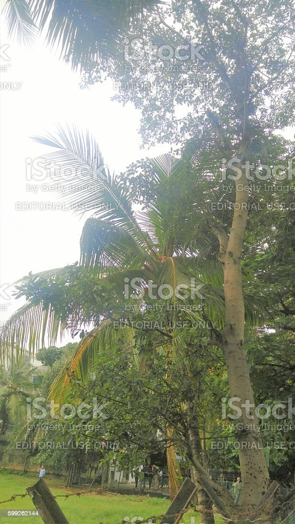 Tree Top Mumbai, India - 9th August, 2016: People commuting in Marine Lines Khau Gali (Food Street) and some taking leisurely walks in the ground adjacent to it. Barbed Wire Stock Photo