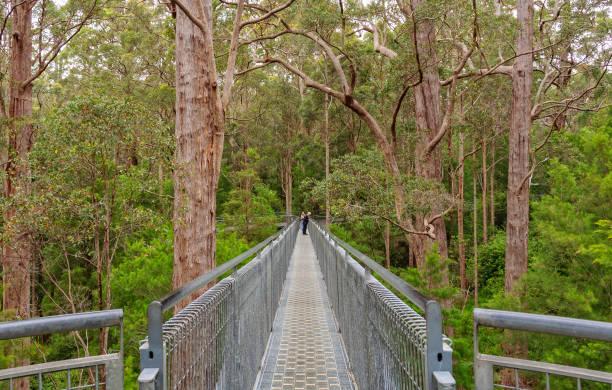 Tree Top Walk - Walpole stock photo