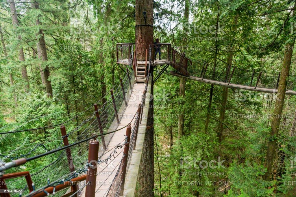 A tree top walkway at the Capilano Suspension Bridge Park stock photo